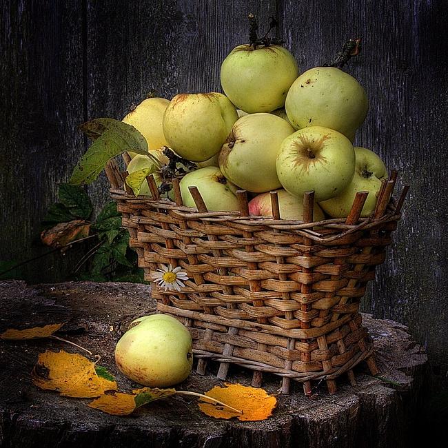 яблоня преснушка фото